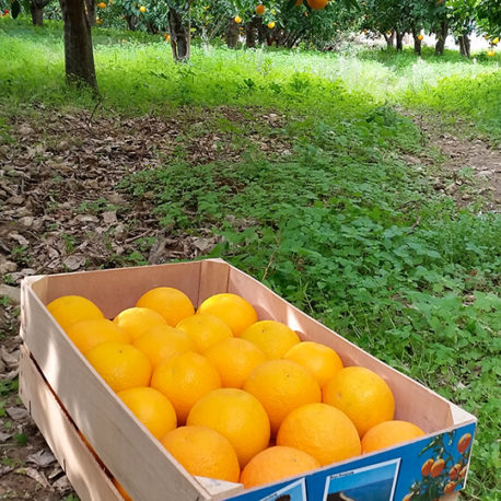 arance-vaniglia