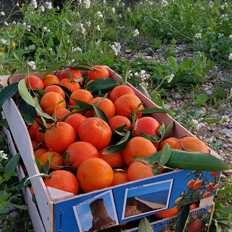mandarini-tardivi-ciaculli